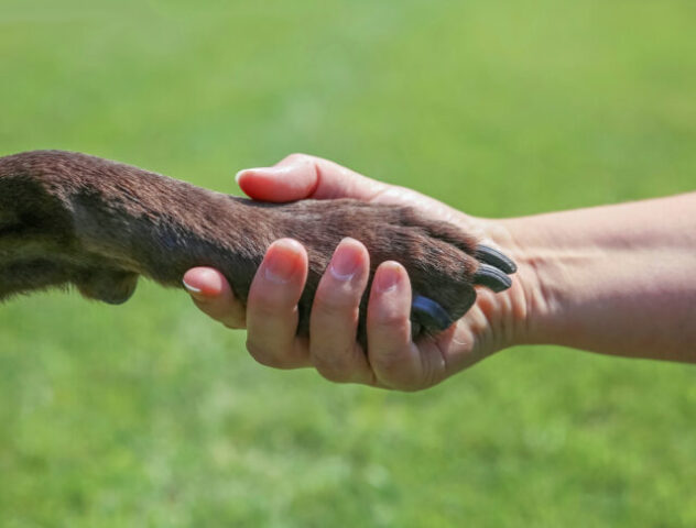 How an Emotional Support Animal Can Help You
