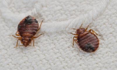 Professional Bed Bug Treatment Across UK
