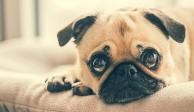 Why Should You Keep Your Dogs Vaccinated?