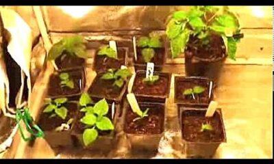 Grow Tents for Indoor Growing