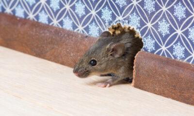 How to Retain Your Best Rat Exterminators