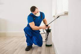Here's why homeowners need professional pest control in Texas