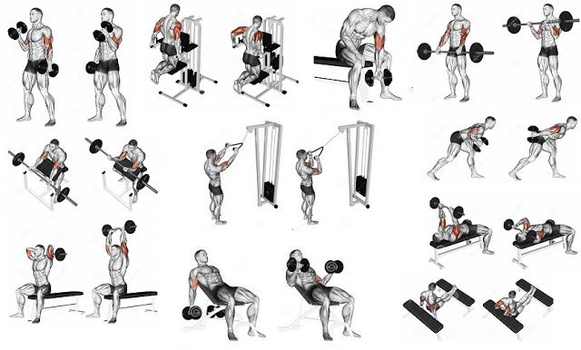 arm exercises to build muscle