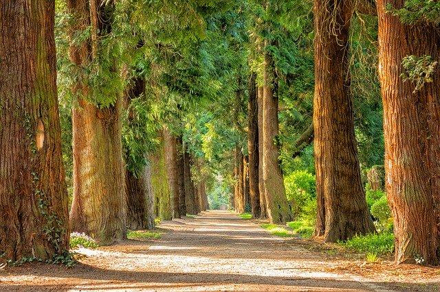 Govt and India Inc united on Tree transplantation policy