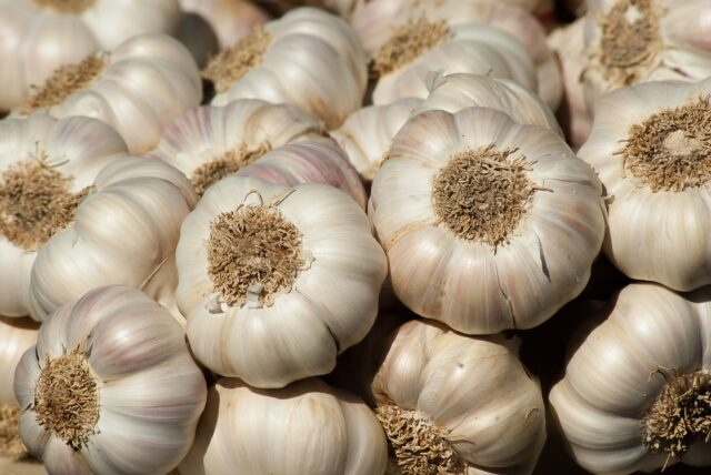 garlic wholesale suppliers