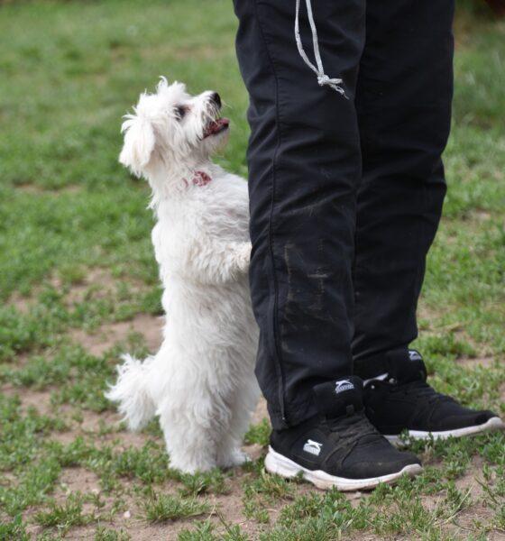 Bulldogology puppy pads