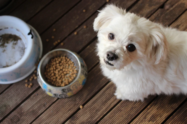 Top 10 Myths About Pet Food and Nutrition