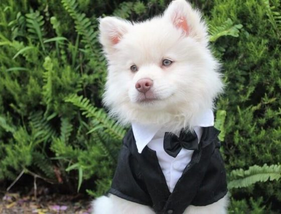 Hacks for Buying the Best Clothes From a Dog Boutique